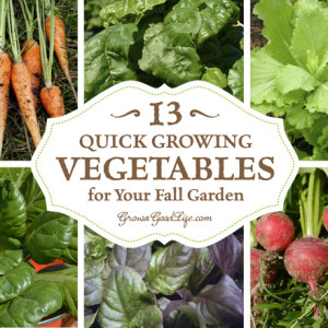 13 Cool Season Crops for Your Fall Garden