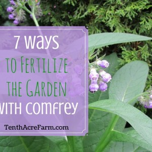 7 Ways to Fertilize the Garden with Comfrey