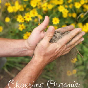Choosing Organic Soil Supplements