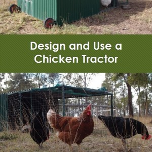 Chicken tractor eBook now available