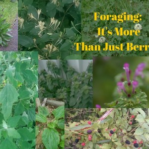 Foraging: It's More Than Just Berries