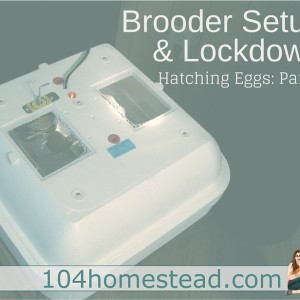 Brooder Setup & Lockdown Procedure