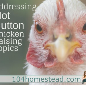 Hot Button Chicken Raising Topics
