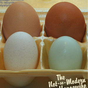 Eggs of a Different Color