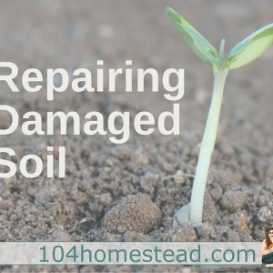 Repairing Damaged Soil