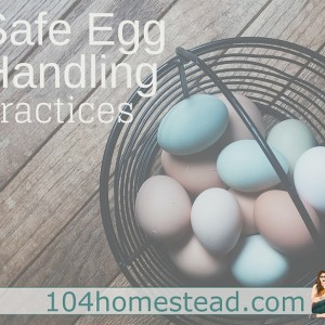 Safe Egg Handling Practices: Are we doing it right?
