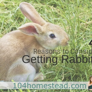 Why to Keep Rabbits and Why Not To