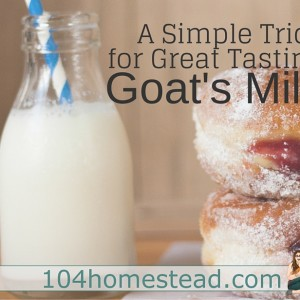 Simple Tips for Great Tasting Goat's Milk