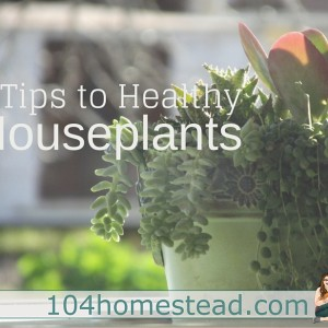 5 Tips to Healthy Houseplants