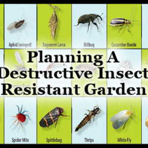 "Planning A ""Destructive Insect"" Resistant Garden"