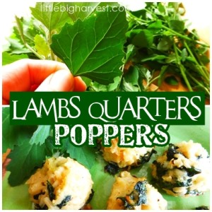 Lamb's Quarters Poppers