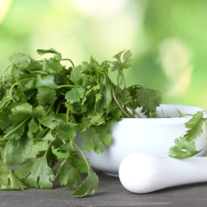 Growing Cilantro 101
