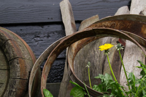 Make Dandelion Wine At Home!