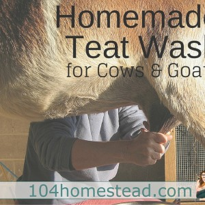 Homemade Teat Wash for Cows & Goats