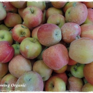 Fall Orchard Care