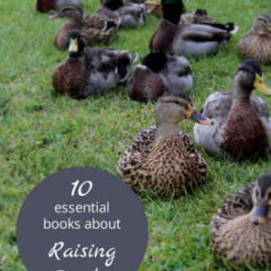 10 Great Books on Raising Ducks