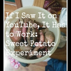 If I Saw It on YouTube, It Has to Work: Sweet Potato Experiment