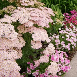 Plants for Sandy Soils