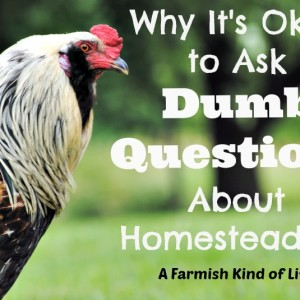 "It's Okay To Ask ""Dumb Questions"" About Homesteading"