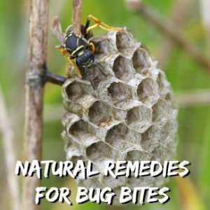 Natural Remedies of Insect Bites and Stings