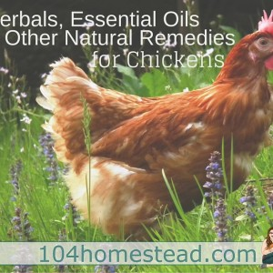 Herbals, Essential Oils & Other Natural Remedies for Chickens