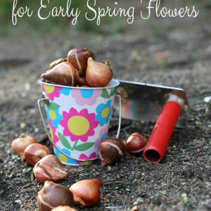 Fall Bulbs for Early Spring Flowers