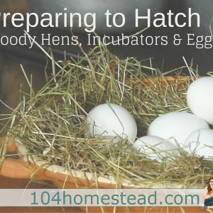 How to Prepare to Hatch: Broody Hens, Incubators & Eggs