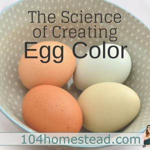 The Science of Egg Color