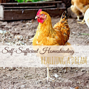 Self-Sufficient Homesteading – Realizing a Dream
