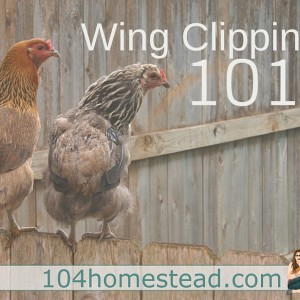 Wing Clipping 101