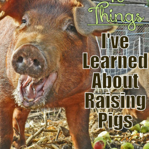 10 Things I've Learned About Raising Pigs