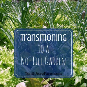 Transitioning to a No-Till Garden