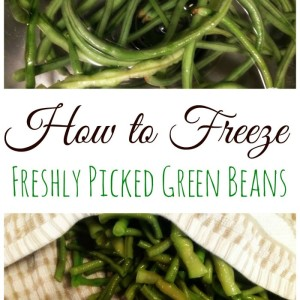 Preserving the Harvest:  Preparing Green Beans for the Freezer