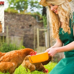 8 Ways To Save Mega Bucks When Feeding Your Chickens: What The Cluck?! Session 10