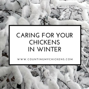 Caring for Your Chickens in Winter: A Guide