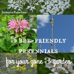 5 bee-friendly perennials for your zone 3 garden