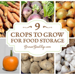 9 Keeper Crops to Grow for Winter Food Storage