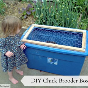 DIY Chick Brooder Box