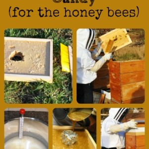 Make Winter Bee Candy For Honey Bees