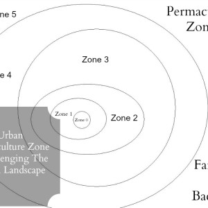 Urban Permaculture Zone 4: Harvesting The Urban Landscape