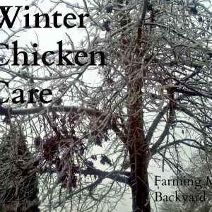 Winter Chicken Care