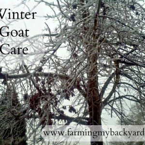 Winter Goat Care