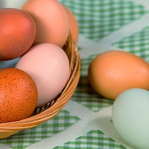 How Different Colored Eggs Are Formed (And Why All Eggs Are Either White Or Blue)