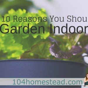 10 Reasons You Should Garden Indoors