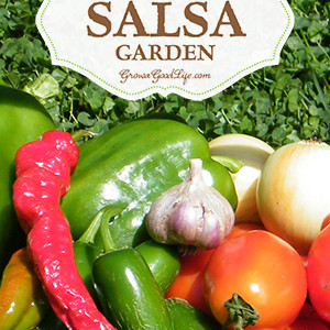 Plant a Salsa Garden and Enjoy Fresh Salsa All Summer Long