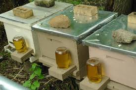 How To Choose A Bee Hive and Colony