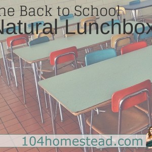 The Back to School Natural Lunchbox