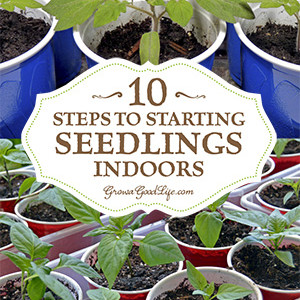 10 Tips to Starting Seeds Indoors