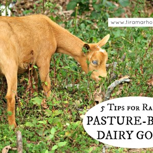 5 Tips for Pasture-Based Goats