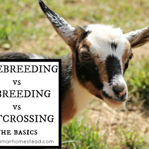 Linebreeding, Inbreeding, and Outcrossing: The Basics